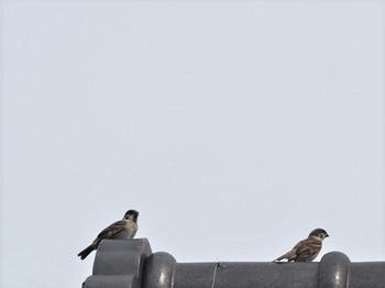 2羽の幼鳥.jpg
