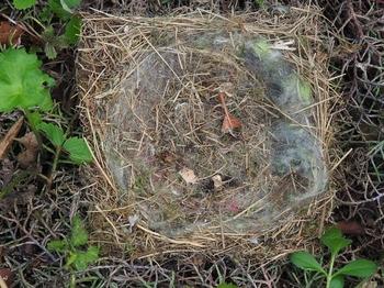 シジュウカラの巣.jpg