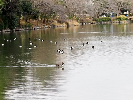 ジュンサイ池 (2).jpg
