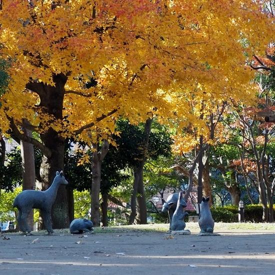 富士公園 (1).jpg