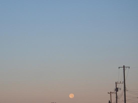 朝の月725.jpg