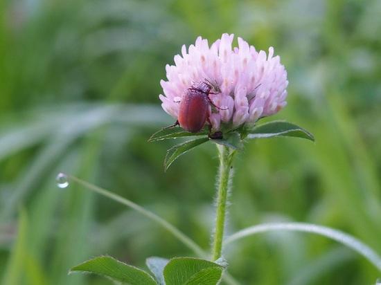 花と虫725.jpg