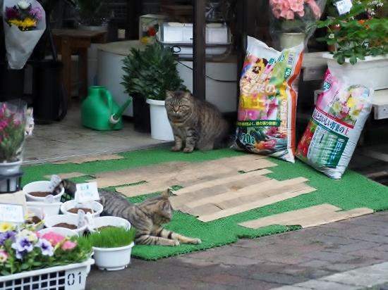 花屋に猫.jpg