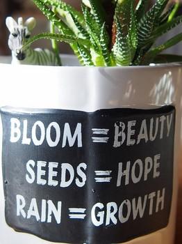 花=美しい・種=希望・雨=成長.jpg