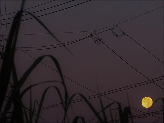 野原からの月725.jpg