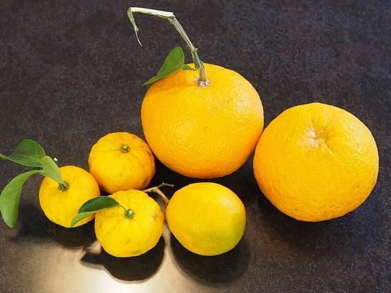 八朔夏蜜柑柚子