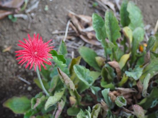 最後のひと花