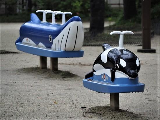 クジラとシャチ