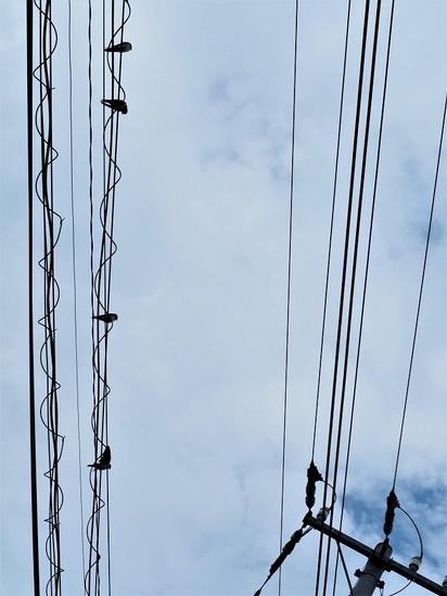 電線にツバメの幼鳥