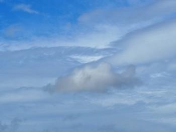魚のように見える雲